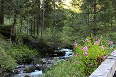 Río rápido a través del bosque en la montaña de las montañas Foto de archivo libre de regalías
