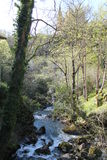 Río Reinazo en Covadonga, Cangas de Onís, Spain Stock Images