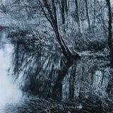 Río reservado y bosque misterioso imagen de archivo