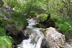 Río, rocas y primavera en las montañas de Cerna, Rumania Imagen de archivo