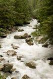 Río rocoso más allá de árboles de hoja perenne Imagen de archivo libre de regalías