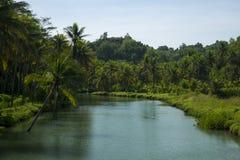 Río rodeado por las palmas grandes Fotos de archivo libres de regalías