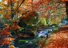 Río rojo del otoño Foto de archivo libre de regalías