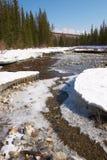 Río rojo, hielo blanco y abetos verdes. fotografía de archivo
