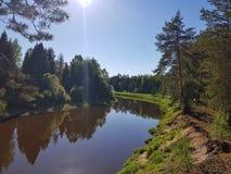R?o salvaje en el bosque de la plantaci?n de pi?as el la primavera con el sol Escena hermosa del aire libre de la naturaleza imagen de archivo