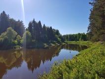 R?o salvaje en el bosque de la plantaci?n de pi?as el la primavera con el sol Escena hermosa del aire libre de la naturaleza foto de archivo