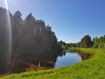 Río salvaje en el bosque de la plantación de piñas el la primavera Escena hermosa del aire libre de la naturaleza imagen de archivo libre de regalías