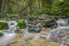 """Río salvaje en fondo relajante del agua del †de la naturaleza """" Fotos de archivo"""