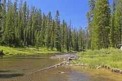 Río salvaje en los árboles Imagen de archivo libre de regalías