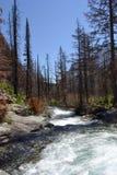 Río salvaje en Parque Nacional Glacier fotografía de archivo