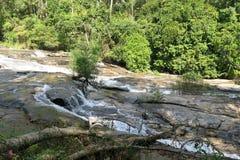 Río salvaje que pasa a través de la selva Fotos de archivo libres de regalías