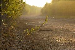 Río seco Foto de archivo libre de regalías