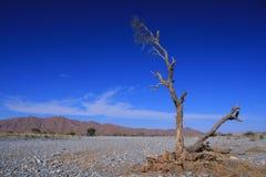 Río seco Foto de archivo
