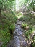 Río secreto en un bosque Imagenes de archivo