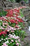 Río sin fin de la flor Imagen de archivo libre de regalías