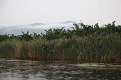 Río, tarde, montaña, niebla Imágenes de archivo libres de regalías