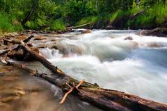 Río tempestuoso de la montaña con un inicio de sesión el primero plano Fotos de archivo
