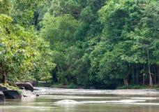 Río tranquilo Imágenes de archivo libres de regalías