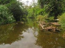 Río tranquilo Fotografía de archivo