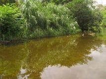 Río tranquilo imagenes de archivo