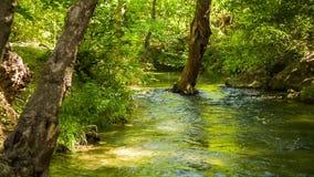 Río tranquilo que fluye en pintoresco hermoso almacen de video