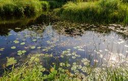 Río tranquilo y cielo del paisaje del verano reflejados Imágenes de archivo libres de regalías