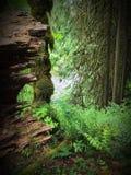 Río a través de los árboles Imágenes de archivo libres de regalías