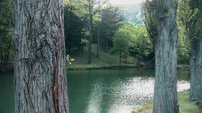 Río a través del barranco, árboles en frente almacen de video