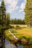 Río a través del bosque escénico fotografía de archivo