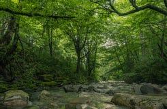 Río a través del interior de un bosque foto de archivo