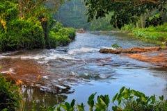 Río tropical Fotografía de archivo