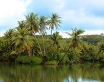 Río tropical Foto de archivo libre de regalías