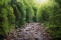 Río tropical de la selva tropical por mañana Fotos de archivo