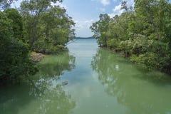 Río tropical en la selva imagen de archivo