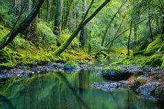 Río tropical y bosque verde enorme Fotos de archivo