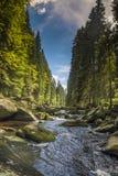 Río Vydra en las montañas de Sumava Imagenes de archivo