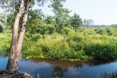 Río y árbol del verano con las raíces Rusia Fotos de archivo