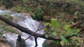Río y árboles Fotos de archivo