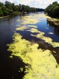 Río y árboles verdes Fotografía de archivo libre de regalías