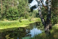 Río y abedul Rusia del verano Imagen de archivo libre de regalías