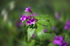 Ríos y charca cercanos blancos frescos hermosos del crecimiento de flor de la primavera Fotos de archivo