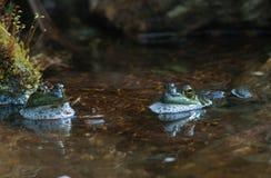 Rñs-gigantes na lagoa imagens de stock royalty free