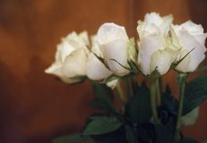 róża bukieta białych kwiatów koloru tła imbirowy zakończenie Fotografia Royalty Free