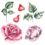 Róża elementu set Akwareli ślubna karta Obraz Stock
