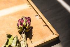 Róża kładzenie plecy rama Fotografia Royalty Free