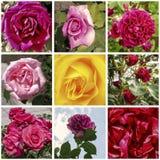 Róża kolaż Zdjęcia Royalty Free