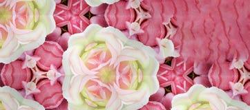 Róża kwiatów tło Obraz Royalty Free
