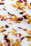 Róża liścia tło Zdjęcia Royalty Free