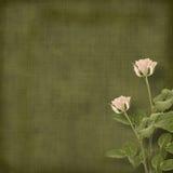 róża stary pocztówkowy rocznik obraz royalty free