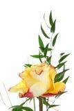 różana herbata zdjęcie stock